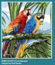 Papoušci 47,5x37cm